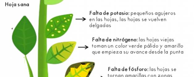 Símptomes visuals de deficiències nutricionals