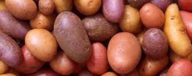 El taulell de l'hortolà: patata